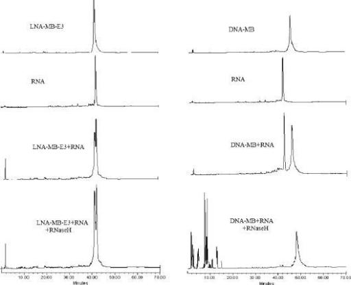 Monitor RNase H cleavage of RNA in LNA-MB-E3/RNA duplex (left) and in DNA-MB/RNA duplex (right) using Ion Exchange HPLC. The concentrations of MBs and RNA were 1 µM. All samples were incubated overnight at room temperature before analyzed by ion-exchange HPLC (Dionex DNAPac™ PA-100 column (4 × 250 mm), 30%–70%, 45 min gradient 1 M NaCl/20 mM NaOH, pH 12).