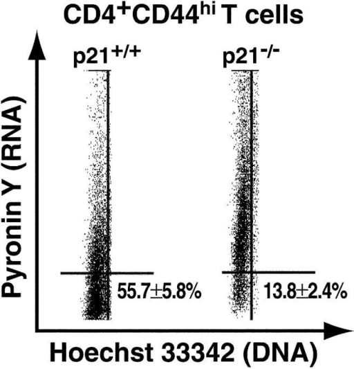 Representative distribution of G0- versus G1-phase in CD4+CD44hi T cells. Splenocytes from 3-mo-old mice (n = 4 animals/group) were stained with antibodies to CD4 and CD44, followed by sequential incubation with Hoechst 33342 (DNA-binding dye) and Pyronin Y (RNA-binding dye) and analyzed by flow cytometry. Pyronin Y staining of G0/G1-phase CD4+CD44hi T cells from p21−/− and p21+/+ BXSB mice is shown (P < 0.05).