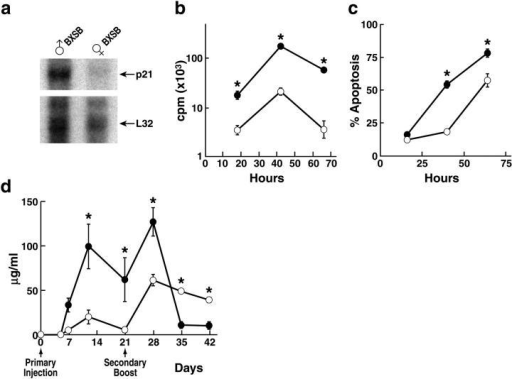Enhanced proliferation and apoptosis, and reduced late secondary immunoglobulin responses of p21−/− B cells from male BXSB mice. (a) Increased p21 expression in B cells from older male BXSB mice. Sorted B cells (CD19+) from 3-mo-old wild-type male or female BXSB mice (n = 5 mice/group) were analyzed by RNase protection assay for expression of p21 and L32 (control). (b) Increased proliferation of p21−/− B cells after IgM cross-linking. Splenocytes (n = 3 mice/group) were stimulated with 10 μg/ml of soluble goat F(ab′)2 anti–mouse IgM in the presence of IL-4 and assessed for [3H]thymidine incorporation (mean ± SEM cpm). (•) BXSB p21−/− mice. (○) BXSB p21+/+ mice. (c) Enhanced AICD of p21−/− B cells. Annexin V positivity of B cells was assessed after anti-IgM stimulation with 10 μg/ml of soluble goat F(ab′)2 anti–mouse IgM (n = 3 mice/group). (•) BXSB p21−/− mice. (○) BXSB p21+/+ mice. (d) Anti-TNP antibody levels after primary and secondary immunizations. 2-mo-old male BXSB p21−/− and p21+/+ mice (n = 4 mice/group) were injected s.c. with 100 μg TNP-KLH emulsified in CFA. Secondary responses were assessed by boosting mice s.c. with 100 μg TNP-KLH in saline on day 21. Mice were bled at the indicated times, and serum was analyzed by ELISA. (•) BXSB p21−/− mice. (○) BXSB p21+/+ mice. *, P < 0.05 by Student's t test.