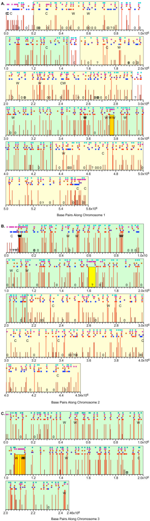 "Locations and efficiencies of putative origins on the three chromosomes. The chromosomes are shown as consecutive horizontal lines, 1 Mbp per line. The position of the centromere on each chromosome is indicated by a light yellow rectangle. The positions of origins classified as strong, medium, weak or very weak are identified by vertical lines. The lines range in color from red (strong) to brown (very weak) and from long (strong) to short (very weak). The positions of potential origins below the detection limit are indicated by the text character, ""0"", and ambiguous origins (where our probes were too widely spaced to permit confident evaluation) are shown by the character, ""?"". Small circles above each chromosome line indicate the positions of origins identified by Heichinger et al. ([14]; top row of circles; light blue), AT islands (next row of circles; magenta), origins identified by Feng et al. [34] in cds1Δ cells (next row; orange) or in wild-type cells (next row; purple), and pre-RCs identified by Hayashi et al. ([15]; bottom row; dark blue or red circles or squares). For the pre-RCs, the colors blue and red distinguish the pre-RCs that are late/weak or early/strong, respectively. The circles represent pre-RCs that are not affected by deletion of cds1, while the squares indicate pre-RCs that replicate to a greater extent in cds1Δ cells than in wild-type cells [15]. The positions of origins where the signals (our measurements; Additional Files 4, 5, 6) for both checkpoint-mutant strains were significantly greater than the signal for wild-type cells are indicated by the text character, ""C"", and the positions of origins with the opposite characteristic (wild-type signal significantly greater than the signals from both checkpoint-mutant strains) are shown by the text character, ""W"". A pale green background indicates a large region with a high frequency of stronger origins. A pale yellow background indicates a large region with a high frequency of weaker origins. (A) chromosome 1; (B) chromosome 2; (C) chromosome 3."