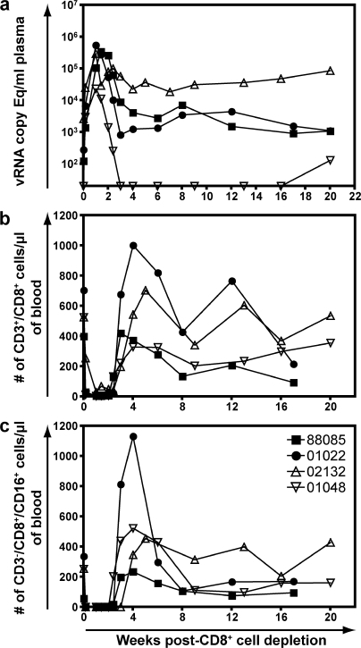 Plasma virus concentrations and CD8+ T cell and NK cell counts after in vivo depletion of CD8+ cells. (a) Plasma virus concentrations of the four SIVmac239Δnef-vaccinated macaques were transiently depleted of their peripheral CD8+ cells. (b and c) The number of CD8+ T cells (CD3+/CD8+ lymphocytes; b) and the number of NK cells (CD3−/CD8+/CD16+; c) in the PBMC after in vivo CD8 depletion.