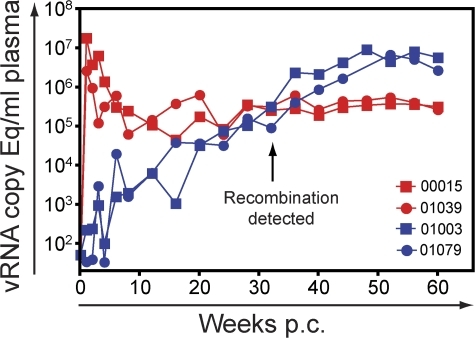 Virus replication in Mamu-B*17+ macaques. Plasma virus concentrations in SIVmac239Δnef vaccinated (blue) and unvaccinated (red) Mamu-B*17+ macaques for 60 wk p.c.
