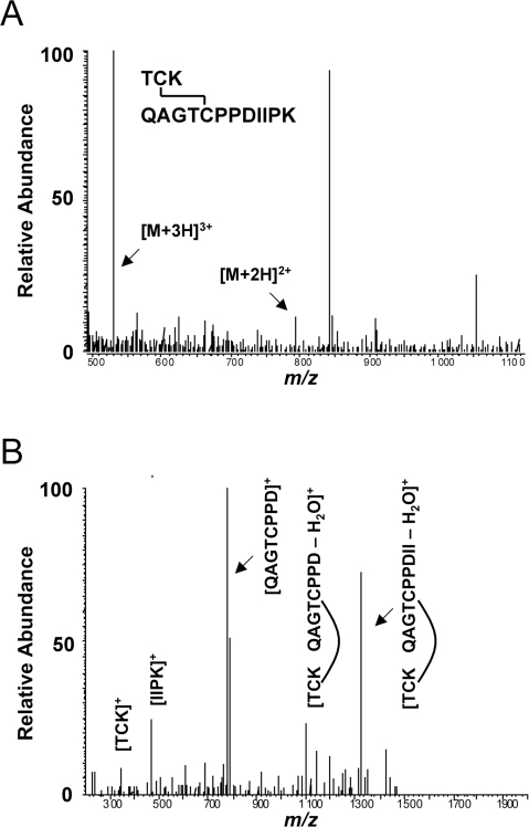Mass spectrometry of non-reduced L2 protein.(A) The full MS spectra of the L2 tryptic peptides T21-K23 and Q24-K35 with C22–C28 disulfide bond intact. The predominant doubly charged and triply charged parent cations are evident. (B) The MS/MS spectra of the doubly charged precursor ion and assignment of internal fragments. Upon collisional activation the disulfide bond was broken, but two major non-reduced species are evident. The non-reduced species were preferentially fragmented at I32 and P34.
