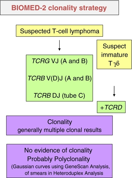 Flow chart for clonality testing for suspected T-cell proliferations. Both TCRG and TCRB gene rearrangements are analyzed simultaneously because of complementarity of the targets and, as such, increase the clonality detection rate. For tissues showing fragmented DNA, testing the TCRG-gene target is most useful and reliable because of the lower-length amplicon sizes. Assessment of TCRB is not recommended in the case of severe fragmentation of DNA samples