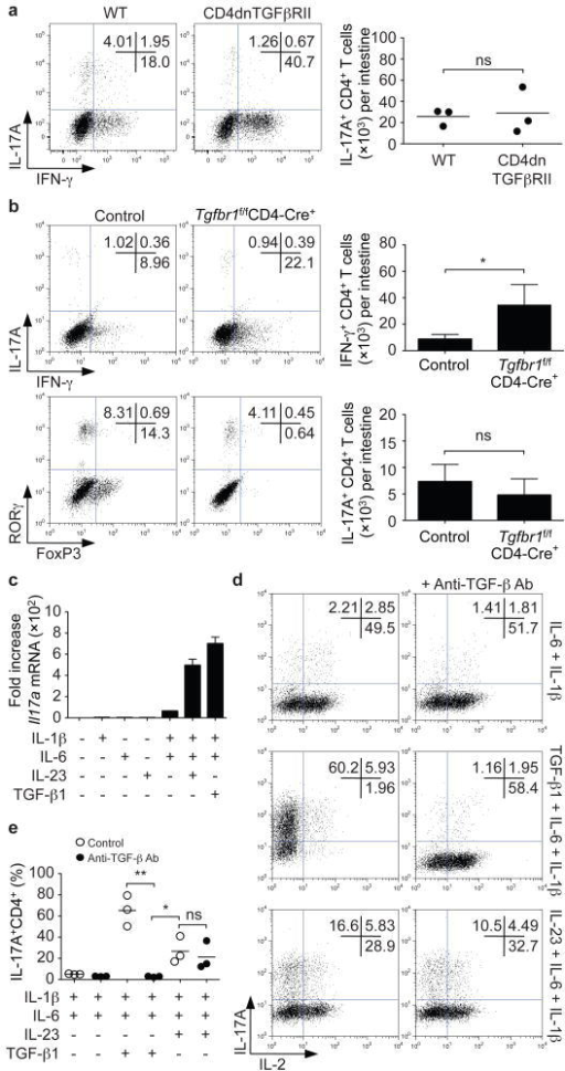 In vivo and in vitro differentiation of Th17 cells in the absence of TGF-β signalinga,b, Lamina propria cells were isolated from CD4dnTGFβRII and age-matched wild type (WT) mice (a) or Tgfbr1f/fCD4-Cre+ and Tgfbr1fl+CD4-Cre+ littermate controls (control) (b). Cells were stained for T cell markers and intracellular expression of IFN-γ, IL-17A, RORγt and FoxP3. Representative experiments are shown in left panels and pooled data are shown on the right (mean; error bars in b denote s.e.m., n=7). No significant differences in absolute numbers and proportions of IL-17A+CD4+ T cells were noted. *P<0.05. c–e, Naïve CD4+ T cells were isolated by cell sorting and activated in serum-free media with plate-bound anti-CD3/anti-CD28 for 4 days together with the indicated cytokines. Il17a mRNA expression was assessed by quantitative RT-PCR (c). IL-17A and IL-2 protein expression were analyzed by intracellular staining. Neutralizing anti-TGF-β antibodies prevented IL-6/IL-1β and TGF-β-dependent differentiation of Th17 cells, but not IL-23 and IL-6/IL-1β induced differentiation. Representative intracellular staining is depicted in panel d and pooled data from four individual experiments with mean values are shown in panel e. *P<0.05, **P<0.01.