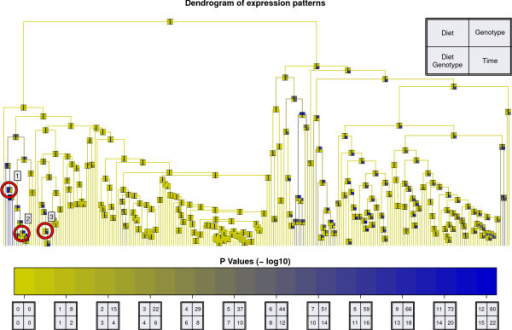 Cluster Dendrogram. Cluster dendrogram of all peaks identified in this dataset (see the Methods section for details). Every node is characterized by four ANOVA p-values shown as a color-coded box with four fields: diet (upper left), genotype (upper right), time (lower right) and combination of diet and genotype (lower left). The different -log10 p-value colorscales for the four factors are shown at the bottom. Three clusters for further discussion (see text) are marked with red circles.