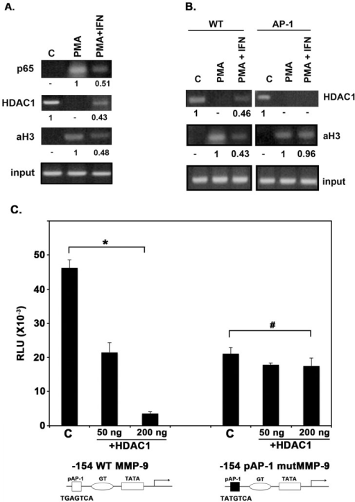 Chromatin Immunoprecipitation (ChIP) analysis of the MMP-9 promoter.(A) HDAC1 recruitment on MMP-9 promoter in response to IFNβ. HT1080 cells were treated with IFNβ for 12 hrs, PMA for 4 hrs, or both. ChIP assays, using antibodies specific to p65, histone deacetylase (HDAC)-1, or acetylated histone-3 (aH3) were performed, followed by PCR performed within the linear range of amplification (determined to be 38 cycles). Input chromatin (1%) was removed from samples prior to immunoprecipitation and subjected to PCR to control for any variation in starting material. Band intensities were normalized to input and the relative band intensities were calculated. The relative band intensities are shown under each band with respect to the strongest band being represented as 1. Data shown is representative of four independent experiments. (B) HDAC1 recruitment on MMP-9 promoter in response to IFNβ is prevented in vivo by rendering AP-1 site non-functional. HT1080 cells were stably transfected with −660 bp MMP-9 promoter luciferase reporter constructs, either with or without proximal AP-1 site mutated. Resulting stable lines were treated with IFNβ for 12 hrs, PMA for 4 hrs, or both. Chromatin immunoprecipitation (ChIP) assays, using antibodies specific to histone deacetylase (HDAC)-1, or acetylated histone-3 (aH3) were performed, followed by PCR. PCR primers were designed to include the region of interest of the MMP-9 promoter and a section of the luciferase reporter, to select against amplification of endogenous wild type MMP-9 promoter region. Band intensities were normalized to input and the relative band intensities were calculated. The relative band intensities are shown under each band with respect to the strongest band being represented as 1. Data shown is representative of three independent experiments. (C) AP-1 binding to the proximal site is required for HDAC1 induced repression of MMP-9 HT1080 cells were co-transfected in 6-well dishes in triplicates with either −154 MMP-9 promoter deletion construct containing a point mutation in the proximal AP-1 site, which renders the binding site non-functional, or with wild type −154 MMP-9 construct and varying amounts of a HDAC1 expression construct. Cell extracts were assayed for firefly luciferase activities, and normalized by protein concentration to account for any cell concentration differences between samples. P-values were calculated using statistical analysis software. As indicated above the bars, * indicates P-values of significance (50 ng  =  0.000698 and 100 ng  =  0.000885, significant difference) and # indicates P-values of no significance (50 ng  =  0.0763 and 100 ng  =  0.882, no significant difference) with significant values being <0.01.