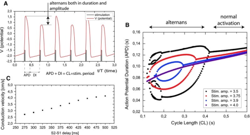 The fitzhugh-nagumo model bifurcation and dynamics pdf995