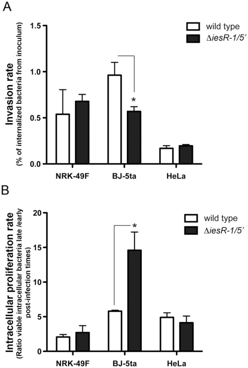IesR-1 affects the capacity of S. Typhimurium to invade and control growth within the human fibroblast cell line BJ-5ta.S. Typhimurium wild type (white bars) and its isogenic ΔiesR-1/5′ mutant (black bars) were used to infect rat and human fibroblasts (NRK-49F and BJ-5ta, respectively). HeLa epithelial cells were also infected for comparison. Viable intracellular bacteria were counted at 2 h, 6 h (HeLa cells) and 2 h, 24 h (fibroblasts) post-infection. (A) Invasion rates. Bars represent the percentage of bacteria from the initial inoculum that was internalized by the cells upon 30 min of incubation. (B) Intracellular proliferation rates. Bars represent the ratio between the number of viable intracellular bacteria counted at 24 h (fibroblasts) or 6 h (HeLa cells) relative to that determined at 2 h post-infection. Values are the mean ± standard deviation from three independent experiments. (*) P<0.05 in student's t test.