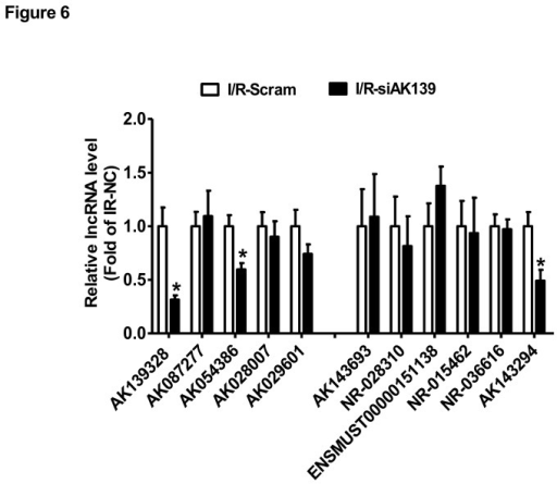 Silencing of AK139328 on LncRNA expression in the livers.3 days post tail vein injection of siRNA against AK139328, the mice were subjected to ischemia/reperfusion treatment. The expression levels of deregulated LncRNAs shown Figure 3C/D were analyzed by real time PCR assays. N=10, *P<0.05 versus I/R-Scramble group. I/R-Scramble, scrambled siRNA treated mice; I/R-siAK139, siAK139328 treated mice.