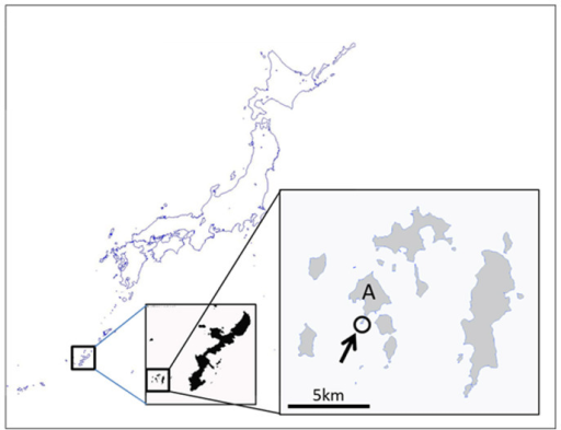 Map showing the study site.Bloom of the cyanobacterium Moorea bouillonii on the gorgonian coral Annella reticulata was observed at Sakubaru reef (arrow) in Akajima Island (A). Maps were downloaded from The Geospatial Information Authority of Japan.