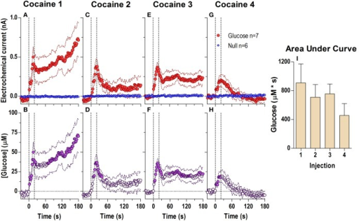 Relative changes in NAc [glucose] induced by cocaine injections assessed at high temporal resolution (2-s bins). Top graphs (A,C,E,G) show mean ± SEM changes in relative currents (nA) detected by Glucose and Null sensors. Bottom graphs (B,D,F,H) show mean ± SEM changes in [glucose] (μM) as a difference between active and  sensors. Two vertical hatched lines (at 0 and 20) marked the onset and offset injection. Horizontal dotted lines show basal levels (= 0 nA and μM). After cocaine injections, the Glucose and Null currents differed significantly (A 1: Glucose/Null [180 s, F(1, 11) = 6.97], interaction [180 s, F(90, 990) = 2.88]; C 2: Interaction [180 s, F(90, 990) = 1.44]; E 3: Glucose/Null [180 s, F(1, 11) = 8.31], interaction [153.5 s, F(77, 847) = 1.31]; G 4: Glucose/Null [47.5 s, F(1, 11) = 4.69], interaction [180s, F(90, 990) = 3.58], all p < 0.05), resulting in a significant [glucose] change for each cocaine injection during the entire analysis window [F(6, 546) = 3.47, 1.69, 1.37, and 4.31, all p < 0.05]. Concentration values significantly different from baseline (Fisher test) are shown as filled symbols. Right panel (I) shows mean ± SEM values of glucose responses induced by cocaine injections assessed by area under the curve for 30 s after the injection onset (n.s.).