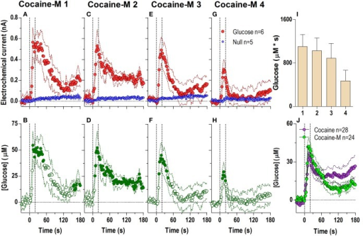 Relative changes in NAc [glucose] induced by cocaine-methiodide injections assessed at high temporal resolution (2-s bins). Top graphs (A,C,E,G) show mean ± SEM changes in relative currents (nA) detected by Glucose and Null sensors. Bottom graphs (B,D,F,H) show mean ± SEM changes in [glucose] (μM) as a difference between Glucose and Null sensors. Two vertical hatched lines (at 0 and 20) marked the onset and offset of the injection. Horizontal dotted lines show basal levels (= 0 nA and μM). The difference in current dynamics between active and  sensors was significant (p < 0.05) for the entire 180-s duration after each cocaine injection (A 1: Glucose/Null [F(1, 9) = 6.69], interaction [F(91, 819) = 3.60]; C 2: Glucose/Null [F(1, 9) = 26.6], interaction [F(91, 819) = 2.23]; E 3: Glucose/Null [F(1, 9) = 1.85], interaction [F(91, 819) = 4.03]; G 4: interaction [F(91, 819) = 2.33], all p < 0.05]. Concentration change was also significant for each cocaine injection for the entire analysis window [F(5, 445) = 4.28, 2.74, 5.01, and 2.95, all p < 0.05]. Individual values significantly different from baseline (Fisher test) are shown as filled symbols. Right panel (I) shows mean ± SEM v glucose responses assessed by area under the curve (n.s.). Right panel (J) compares the mean glucose response between the cocaine and cocaine-methiodide group; no significant differences found.