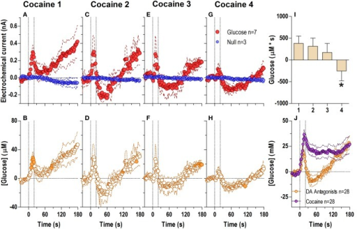 Relative changes in NAc [glucose] induced by cocaine injections under conditions of full dopamine receptor blockade assessed at high temporal resolution (2-s bins). Top graphs (A,C,E,G) show mean ± SEM changes in relative currents (nA) detected by Glucose and Null sensors. Bottom graphs (B,D,F,H) show mean ± SEM changes in [glucose] (μM) as a difference between Glucose and Null sensors. Two vertical hatched lines (at 0 and 20) marked the onset and offset injection. Horizontal dotted lines show basal levels (= 0 nA and μM). The difference in current dynamics between Glucose and Null sensors was significant after each cocaine injection (A 1: Glucose/Null [25 s F(1, 8) = 5.89], interaction [21 s F(10, 80) = 2.24]; C 2, E 3, G 4: interaction [180 s, F(90, 720) = 1.41, 1.28, 1.30, respectively] all p < 0.05. [Glucose] change was also significant for each cocaine injection [F(6, 540) = 2.56, 3.53, 3.11, 3.62, respectively all p < 0.05] Concentration values significantly different from baseline (Fisher test) are shown as filled symbols. (I) shows significant differences in mean ± SEM glucose responses (area under curve) induced by four cocaine injections during DA receptor antagonism [F(3, 18) = 6.62 p < 0.05]. Asterisk denotes significant (p < 0.05) differences between the 4th injection and all others (Fisher test). (J) shows significant differences in [glucose] between cocaine and cocaine-methiodide groups for the entire analysis window [Main effect: F(1, 54) = 5.16, Treatment × Time interaction: F(90, 4860) both p < 0.05] assessed for all drug injections.