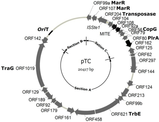 A map of pTC1. ORFs are shown by arrows. ORFs with no homologues in the other known Sulfolobus CPs are indicated with blank arrows, whereas those with homologues in other CPs are shown with black arrows. Functional sections A, B and C are indicated.