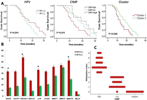 (A) Kaplan-Meier survival plots: (i) HPV (+) HNSCC tumors showing better survival compared to HPV (-) tumors. (ii) CIMP-high group of HNSCC tumors showing poorer survival compared to other. (iii) Two epigenetic cluster also showed differential survival with cluster-1 had a poor survival. (B) Frequency of promoter methylation of 10 tumor-related genes/loci in HPV (+) and HPV (-) HNSCC [*P<0.05 (Mantel–Cox Log–rank)]. (C) Methylation index (MI) in three CIMP-groups of HNSCC tumors.