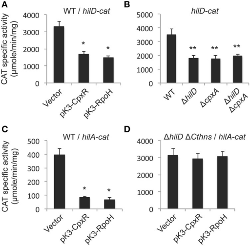 CpxR represses the autoregulation of hilD and thus negatively affects the expression of hilA. Expression of the hilD-cat transcriptional fusion carried by plasmid philD-cat was tested in the WT S. Typhimurium strain carrying plasmid pK3-CpxR or pK3-RpoH, or the vector pMPM-K3 (A), as well as in the WT S. Typhimurium strain and its isogenic ΔhilD, ΔcpxA, and ΔhilD ΔcpxA mutants (B). Expression of the hilA-cat transcriptional fusion carried by plasmid philA-cat was tested in the WT S. Typhimurium strain (C), or in its isogenic ΔhilD ΔCthns mutant (D), containing plasmid pK3-CpxR or pK3-RpoH, or the vector pMPM-K3. Plasmids pK3-CpxR and pK3-RpoH, as well as Salmonella, lack the gene encoding the repressor LacI and thus they constitutively express CpxR and RpoH, respectively, from a lac promoter. CAT-specific activity was determined from samples collected of bacterial cultures grown for 5 h in LB medium at 37°C. The data are the averages of three different experiments performed in duplicate. Bars represent the standard deviations. *Expression statistically different with respect to that shown by the same fusion in the WT strain containing the vector. **Expression statistically different with respect to that shown by the same fusion in the WT strain.