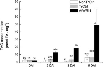 Time study of triacylglycerol concentrations in leaves expressing AtWRI1. Given as nmol fatty acids (FA) per mg dry weight (dw) from one to five days after infiltration (DAI). TrCtrl; transformed control, NonTrCtrl; non-transformed control. Results are the mean from three biological replicates ± standard deviation. Letters distinguish significant different means according to Tukey's test at level P ≤ 0.05