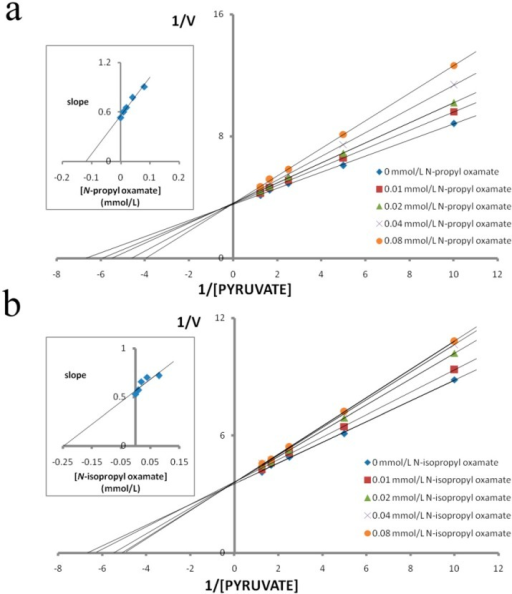 Effect of pyruvate on the inhibitory activity of N-propyl oxamate and N-isopropyl oxamate on plateau pika LDH-B4. Reciprocal values of V were calculated taking the reciprocal values of Δ340 nm/min, plots of reciprocal reaction velocity versus reciprocal pyruvate concentration at a constant NADH concentration. The concentrations of pyruvate used were 0.1 mmol/L, 0.2 mmol/L, 0.4 mmol/L, 0.6 mmol/L, and 0.8 mmol/L. NADH concentration was kept at 0.15 mmol/L. The Km of LDH-B4for pyruvate was 0.172 mmol/L. (◆) assays with 0 mmol/L, (■) 0.01 mmol/L, (▲) 0.02 mmol/L, (×) 0.04 mmol/L and (●) 0.08 mmol/L of N-propyl oxamate or N-isopropyl oxamate. Upper left: determination of Ki from replot of slope values against inhibitor concentrations. The Ki of N-propyl oxamate and N-isopropyl oxamate for LDH-B4 were 0.119 mmol/L and 0.248 mmol/L, respectively.