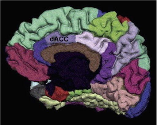 Dorsal anterior cingulate cortex (dACC) region of interest, obtained from the Desikan-Killiani FreeSurfer atlas.