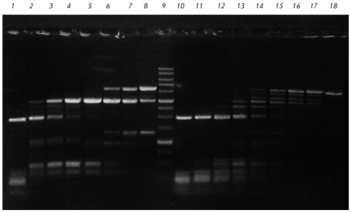 Incomplete cleavage of pFsp4HI3/DriI showing higher ElmI activity in5'-GCNGC-3' sequences with three or four 5-methylcytosines,compared with 5'-GCNGC-3 sequences with only two 5-methylcytosines thatBisI cuts preferably. Electrophoresis in 1% agarose gel. Lanes: 1-8,pFsp4HI3/DriI, treated with serial 2-fold dilutions of ElmI (initial amount,added to the initial reaction mixture is 1 u.a.); 9, DNA molecular weightmarker 1 kb; 10-17, pFsp4HI3/DriI, treated with serial 2-fold dilutions of BisI(initial amount, added to the reaction mixture is 1 u.a.); 18, pFsp4HI3/DriI.
