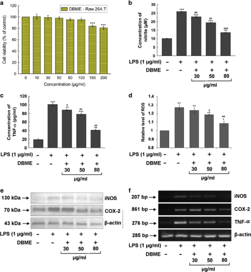 In vitro anti-inflammatory effects of DBME in RAW 264.7 cells. (a) Effect of DBME on cell proliferation and viability of murine macrophage RAW 264.7 cells. (b) Effect of DBME on LPS-induced production of nitrite. (c) Effect of DBME on LPS-induced production of TNF-α. (d) Effect of DBME on LPS-induced production of ROS. (e) Effect of DBME on LPS-induced expression of inflammatory proteins. (f) Effect of DBME on LPS-induced mRNA levels of inflammatory proteins in RAW 264.7 cells. Cytotoxicity data are expressed as mean±S.D. (N=6); *P<0.05, **P<0.01 and ***P<0.001 versus 0 μg/ml. Nitrite, TNF-α and ROS data are expressed as mean±S.D. (N=3); *P<0.05, **P<0.01 and ***P<0.001 versus 0 μg/ml LPS. #P<0.05, ##P<0.01 and ###P<0.001 versus 1 μg/ml LPS.