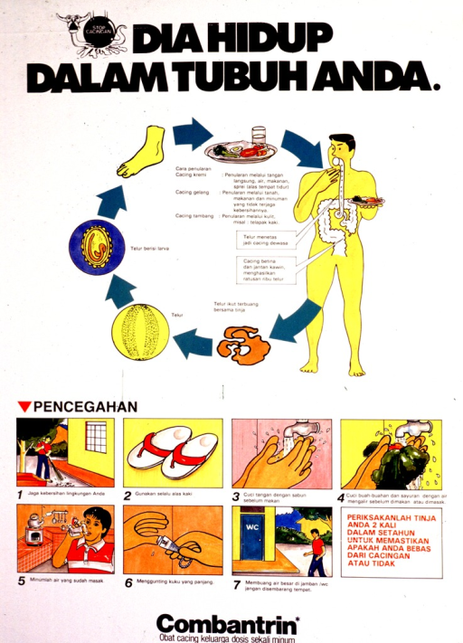 <p>Predominantly white poster with black and red lettering.  Title at top of poster.  Illustration of a worm being squashed by a cannon ball to left of title.  Color illustration in upper portion of poster depicts the life cycle of intestinal worms.  Seven illustrations near bottom of poster show preventive measures, such as wearing shoes, washing hands, washing fresh foods, and proper hygiene.  The drug name Combantrin is at the bottom of poster.</p>