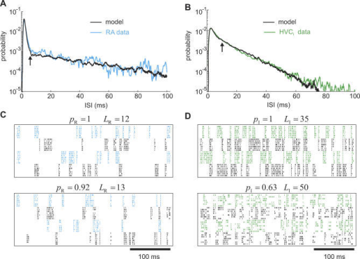 Song-Related ISI pdfs of RA and HVCI Neurons(A,B) Model-based fits of averaged ISI pdfs in RA and HVCI neurons during singing. The arrows delimit the ISI range of the burst models in Figure 2C, i.e., 6 ms and 10 ms, respectively. The RA-neuron data (A) were taken from [10], and the HVCI data (B) were provided courtesy of A. Kozhevnikov. LR = 12, and LI = 35.(C,D) Raster plots of song-related spike trains in four RA and four HVCI model neurons for two different values of link counts LR/I and burst probabilities pR/I. Spikes are represented as tick marks and drawn in alternating colors for different neurons.