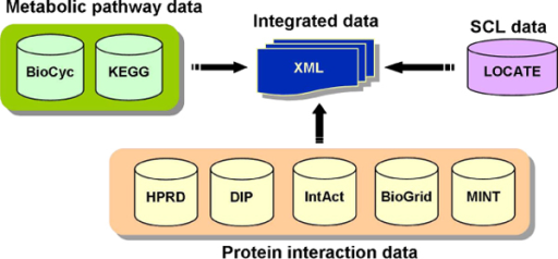 Schematic representation of data integration. Schematic representation of data integration. SCL information of LOCATE database integrated with that of interaction and metabolic data. The resulting integrated data is represented in XML format.