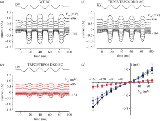 Mechano-electrical transduction in WT and TRPC3/TRPC6 DKO OHCs. (a–c) MET currents in response to 45 Hz sinusoidal force stimuli from a fluid jet in WT and TRPC3/TRPC6 OHCs. The holding potential was −84 mV and the membrane potential was stepped in 20 mV increments from −164 mV to +96 mV. Driver voltage (DV, amplitude 40 V) waveform to the fluid jet is shown above the current traces. Positive DV moves the hair bundles in the excitatory direction towards the kinocilium. Recordings in a–c are averages from two stimulus presentations each. (a) WT OHC, mid-basal coil P2 + 1. Cm 5.6 pF; Rs 0.80 MΩ. (b) TRPC3/TRPC6 DKO OHC, basal end of apical coil P2 + 2. Cm 7.4 pF; Rs 0.63 MΩ. (c) TRPC3/TRPC6 DKO OHC, mid-basal coil P2 + 2. Cm 6.9 pF; Rs 0.74 MΩ. (d) Current-voltage curves averaged from 4 WT OHCs from the basal coil (black squares), 5 apical-coil TRPC3/TRPC6 DKO OHCs (blue circles) and 8 basal-coil TRPC3/TRPC6 DKO OHCs (red circles).