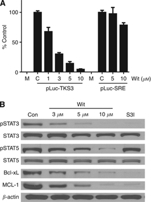 Withacnistin inhibits STAT3 transcriptional activity and expression of downstream target genes. (A) MDA-MB-468 cells were transiently transfected with pLucSRE or pLucTKS3 along with β-gal reporter genes and were then treated with vehicle or Wit as indicated. The cytosolic extracts were prepared and analysed for luciferase activity as described in Materials and Methods. C and M designate control and mock transfection, respectively. (B) MDA-MB-468 cells were treated for 24 h with the indicated concentrations of Wit and processed for western blotting with the indicated antibodies as described in Materials and Methods. S3I designates S3I-1757, a control STAT3 inhibitor. The data in A and B are representative of three and two independent experiments, respectively.