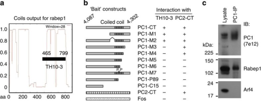 Interaction of PC1 cytoplasmic C-terminal tail with Rabep1.(a) Yeast two-hybrid screening of a rat brain cDNA library using human PC1 215-amino-acid C-terminal tail as bait (PC1-CT) identified a clone (TH10-3) corresponding to amino acids 465 to 799 of Rabep1 with extensive coiled-coils69. (b) Mapping of Rabep1 interaction region by yeast two-hybrid assay using a series of PC1-CT deletion constructs22. The coiled-coil domain is indicated. PC1-M7 contains proline at a and d positions of the heptad, disrupting α-helical structure of the coiled-coil domain. PC1-P89 contains a germline mutation R4227X2227. PC1-C15 contains a somatic mutation found in a renal cyst resulting in reading-frame shift2270. Positive interaction was scored by both growth on triple selective medium and positive β-gal activity. PC2 C-terminal tail (PC2-CT) or Fos served as negative controls. Interactions of the PC1 constructs with PC2-CT are shown as a comparison. (c) Co-immunoprecipitation of endogenous PC1 with Rabep1, but not with Arf4 in CD cells.