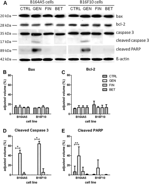 Analysis of proapoptotic and antiapoptotic molecules in B16 melanoma cells after treatment with cytostatic drugs.Representative Western blot results (A) as well as densitometric analysis of performed Western blots for Bax (B), Bcl-2 (C), cleaved caspase 3 (D) as well as cleaved PARP (E) expression in B16 melanoma cells after treatment with genistein, betulin or fingolimod for 72 h, respectively (mean ± SD, n = 3). The signal strength given by the adjusted volume of the bands of the respective proteins was calculated in comparison to the respective β-actin band of each sample. Significance was determined by an unpaired t-test.