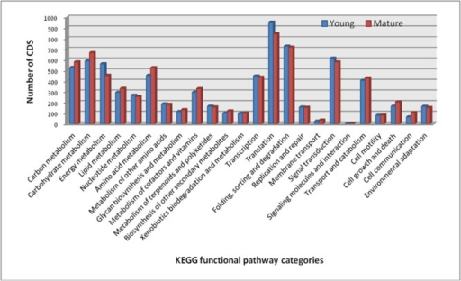 KEGG pathway analysis of CDS in the young and mature leaf transcriptome of Cassia angustifolia.