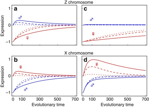 The evolution of dosage compensation on Z and X chromosomes.Expected gene expression is shown for males (blue) and females (red) under a very low (ρ=0.1, dotted line), intermediate (ρ=0.5, dashed line) and strong inter-sexual correlation (ρ=0.8, solid line)—(see equations (13) and (14) for dynamics). a,b show equal selection in males and females (Sm=Sf=0.5); c,d show stronger selection in males (Sm=1, Sf=0.1). Evolutionary time refers to the number of generations, ignoring the time taken by successive mutations to fix. Expression is scaled according to the initial degradation z0 of expression in the heterogametic sex due to the loss of one gene copy, which here is set at z0=1. Other parameters were also held equal across the two sex chromosome systems (NeX=NeZ=1125, μ=0.0003).