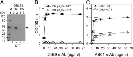 24E9 mAb recognizes a conformation epitope on PFD1235w DBLβ3_D4. (A) Western blotting of PFD1235w DBLβ3_D4 (D4) and DBLβ3_D5 (D5). +DTT (reduced), −DTT (nonreduced). Lane 1, Prosieve protein marker (M) visualized by phosphorescent paint as dots. Lanes 2 and 3, DBLβ_D4 (±DTT). Lanes 4 and 5, DBLβ3_D5 (±DTT). Arrow shows nonreduced DBLβ3_D4 (lane 3) recognized by 24E9 mAb. (B) 24E9 mAb ELISA reactivity against reduced (+DTT) and nonreduced (−DTT) PFD1235w DBLβ3_D4. (C) AB01 mAb ELISA reactivity against reduced (+DTT) and nonreduced (−DTT) DBLγ of PFD1235w. Mean OD values are shown for three independent experiments. Error bars indicate SD.