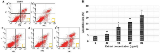 (A Polyphenol-rich extract of Salvia chinensis stimulates apoptosis in MiapaCa-2 human pancreatic cancer cells. (A) Apoptotic cells were evaluated using flow cytometry following annexin V-FITC and PI staining. (a) Control, (b) 20 µg/ml, (c) 40 µg/ml, (d) 60 µg/ml and (e) 80 µg/ml concentration of extract. Cells in the lower left quadrant (annexin V-FITC-/PI-) are viable, those in the lower right quadrant are early apoptotic and those in the upper right quadrant are late apoptotic or necrotic. (B) Percentages of apoptotic cells following treatment with various concentrations of the extract. Data are expressed as the mean + standard deviation of three independent experiments. *P<0.05, **P<0.01, vs 0 µg/ml (control). FITC, fluorescein isothiocyanate; PI, propidium iodide.