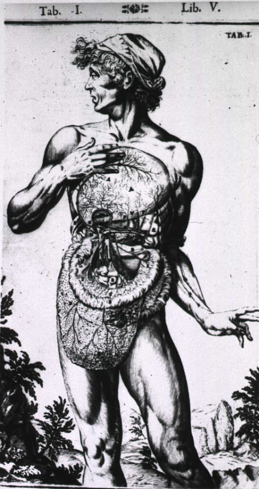 <p>Human figure with abdominal cavity exposed.</p>