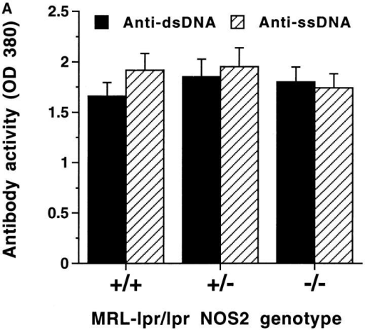 (A and B) Anti-DNA and anti-Ig rheumatoid factor antibody activity in sera from NOS2-modified MRL–lpr/lpr mice. 20-wk-old mice  were examined. A shows results from experiments testing sera for anti-ss-DNA antibody and anti-dsDNA antibody activity, and B shows results from experiments testing sera for IgG and IgM anti-Ig (rheumatoid factor) activity. The bars display the means and one standard deviation.