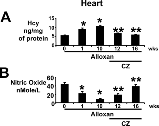 Heart tissue levels of Hcy and nitric oxide: (A): In anesthetized mice that were treated with alloxan (A), hearts were removed at 0 (n=6), 1 (n=6) and 10 (n=6) weeks (wks). The remaining alloxan-treated mice received ciglitazone (CZ) and hearts were removed at 12 (n=6) and 16 (n=6) wks. Left ventricle (LV) homogenates were prepared. Total Hcy was extracted, separated by HPLC, and quantitated by a spectrophotometer. Hcy was expressed as ng/mg of protein. *, p<0.01 when compared to 0 wk; **, p<0.01 when compared to 10 wks. (B): Total nitrate/nitrite was measured by Griess method. Nitric oxide levels were expressed as nMole/L of LV homogenate. Identical amounts of total protein were used. *, p<0.02 when compared to 0 wk; **, p<0.005 when compared to 10 wks. Note that tissue levels of Hcy were normalized by CZ treatment.