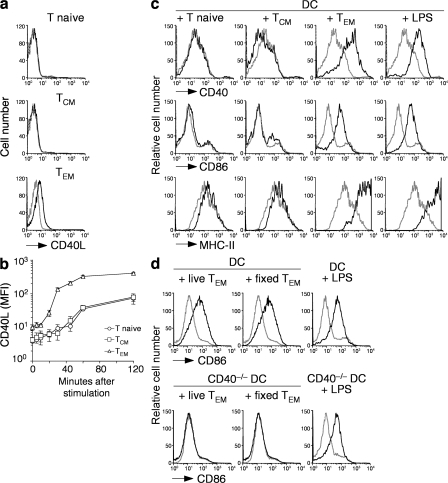 CD4+ TEM cells constitutively express CD40L and promote DC maturation in vitro through CD40L–CD40 interaction. (a) Surface expression of CD40L (black lines) in CD4+ T naive (CD44lowCD62L+CD127+), TCM (CD44highCD62L+CD127+), and TEM (CD44highCD62L−CD127+) cells. Gray lines represent control staining with isotype-matched control antibodies. (b) Kinetics of CD40L surface expression on CD4+ T cell subsets sorted as in panel a and stimulated in vitro with anti-CD3 and PdBU. Data are the means ± SD of three separate experiments. Student's t test on values at time 0: TEM versus TCM, P = 0.041; TEM versus T naive, P = 0.023; TCM versus T naive, NS. Unstimulated T cells cultured for the same time had a level of CD40L expression comparable to time 0 (not depicted). (c) Expression of CD40, CD86, and MHC class II (black lines) on DCs that had been cultured for 12 h with the indicated CD4+ T cell subsets or stimulated with LPS. Gray lines represent staining of untreated immature DCs. Results are representative of four independent experiments. (d) Expression of CD86 (black lines) in wild-type DCs (top) or CD40−/− DCs (bottom) cultured for 12 h with live or fixed CD4+ TEM cells or with LPS as control. Gray lines represent staining of untreated immature DCs. Results are representative of three independent experiments.