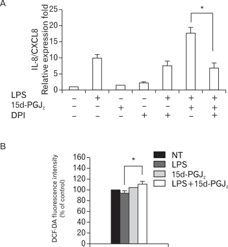 Activity of NAD(P)H oxidase mediates the upregulatory effect of 15d-PGJ2 on the expression of LPS-induced IL-8/CXCL8 mRNA in SHR VSMCs. (A) VSMCs were untreated or treated with LPS (1 µg/ml) and/or 15d-PGJ2 (10 µM) in the absence or presence of DPI (10 µM) for 4 h. Bars represent means±SD from three independent experiments. *p<0.05 vs. VSMCs treated with 15d-PGJ2/LPS. (B) VSMCs were untreated or treated with LPS (1 µg/ml) and/or 15d-PGJ2 (10 µM) for 4 h, stained with DCF-DA (50 µM) for ROS detection, and subjected to flow cytometry. Bars represent means±SD from four independent experiments. *p<0.05 vs. VSMCs treated with LPS alone.