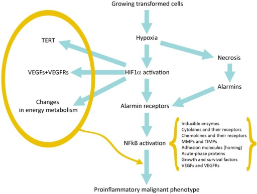 Schematic representation of the pathway linking hypoxia and HIF1α activation with inflammation and tumor progression.