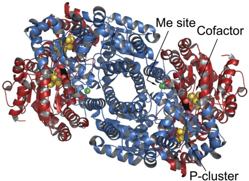 Three-dimensional structure of the α2β2 tetramer of A. vinelandii Component 1 (3U7Q.pdb).The figure is centered on the approximate two-fold axis between the αβ pairs. Red is the α-subunit and blue is the β-subunit with the three metal centers shown in space filling PCK models. The Component 2 (Fe-protein) docking site is along the axis (arrow) identifying the P-cluster. Figure was prepared using Pymol (http://pymol.org/).
