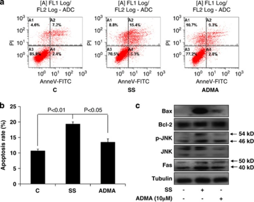 ADMA inhibited serum starvation-induced apoptosis and the Fas/JNK pathway in LoVo cells. LoVo cells were cultured in control or serum-free media in the presence or absence of 10 μM ADMA for 96 h. (a) The apoptosis rate was assayed using flow cytometry after staining with Annexin V-FITC and propidium iodide. (b) Statistical results of apoptosis in different cell groups. (c) Western blot analysis of Fas/JNK pathway proteins as indicated. Data are presented as mean±S.E., and are representative of two independent experiments performed in triplicate. The statistical significance was calculated with Student's t-test. C: control media (10% FBS DMEM); SS: serum starvation