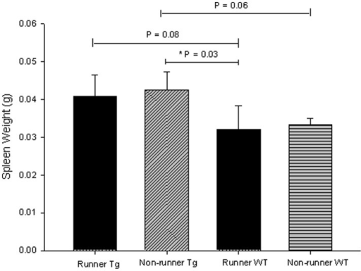 Spleen weights obtained at sacrifice in transgenic (N = 7 runners and 8 non-runners) and wild-type mice (N = 3 per condition) were increased in transgenic non-runners compared with wild-type runners (p = 0.03), but no other significant differences were observed.