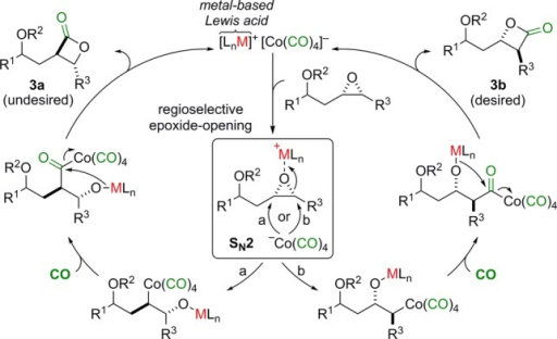 Regioselective Carbonylation of Protected cis-EpoxyhomoallylicAlcohols