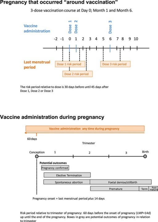 Risk windows defined for the analysis of pregnancy outcomes around vaccination