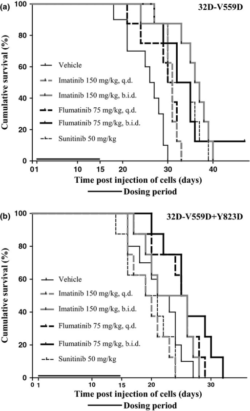 In vivo effects of imatinib, flumatinib, and sunitinib on the survival of mice after s.c. injection of 32D-V559D (a) or 32D-V559D+Y823D (b) cells. Animals were randomized into groups and treated by oral gavage with vehicle, imatinib, flumatinib, or sunitinib according to the indicated dosage regimen and dosing period.