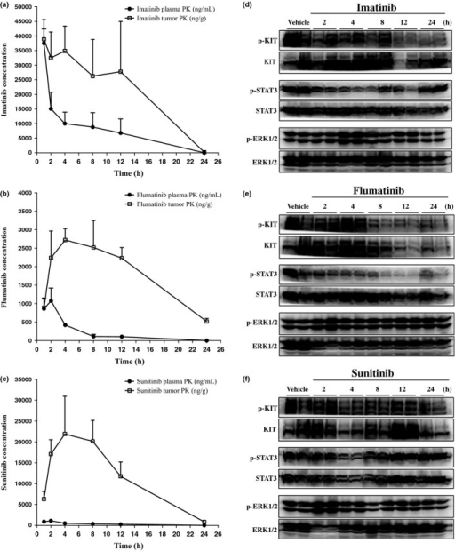 Pharmacokinetic (PK) and pharmacodynamic properties of imatinib, flumatinib, and sunitinib. Mice bearing 32D-V559D + Y823D tumors received a single dose of 150 mg/kg imatinib, 75 mg/kg flumatinib, or 50 mg/kg sunitinib. Mice were killed at different times post-dosing as indicated and the concentrations of imatinib (a), flumatinib (b), and sunitinib (c) were determined in blood plasma and tumor tissue. The phosphorylation levels of KIT, ERK1/2, and signal transducer and activator of transcription-3 (STAT3) in tumors at various times after dosing of imatinib (d), flumatinib (e), sunitinib (f) were determined by Western blotting.